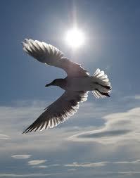 fly high defeat fear